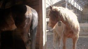 Los caballos están en la granja almacen de video