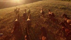 Los caballos están galopando almacen de video