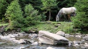 Los caballos pastan cerca de un río de la montaña almacen de video