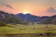 Los caballos pastan debajo de las montañas Foto de archivo libre de regalías