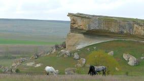 Los caballos pastan en el campo bajo cuestas del acantilado almacen de video