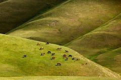Los caballos pastan en las montañas Fotos de archivo