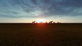 Los caballos pastan en prados en la puesta del sol almacen de metraje de vídeo