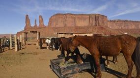 Los caballos pastan en rancho en valle del monumento Imagen de archivo libre de regalías