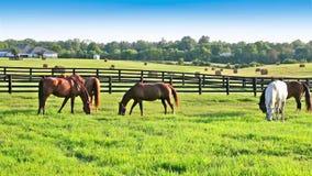 Los caballos que pastan en pastos verdes del caballo cultivan metrajes