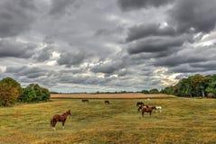Los caballos que pastan en un Maryland cultivan en otoño Fotografía de archivo libre de regalías
