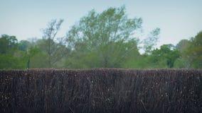 Los caballos que saltan la cerca At The Races almacen de metraje de vídeo