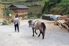 Los caballos se utilizan para el transporte de mercancías en Longsheng, Guilin, China Foto de archivo