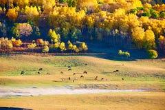 Los caballos y los árboles del otoño en los prados Imagen de archivo libre de regalías