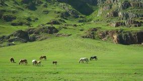 Los caballos y los caballos caminan en una hierba verde Paisaje de la montaña metrajes