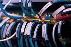 Los cables de la red conectaron para cambiar - seleted el foco fotos de archivo libres de regalías