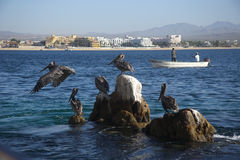 Los cabos Royalty Free Stock Photos
