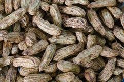 Los cacahuetes en su cáscara a hervir texturizaron el fondo de la comida Imágenes de archivo libres de regalías