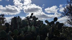 Los cactus contra un barranco de la Florida del cielo azul se arrastran fotos de archivo libres de regalías