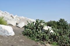 Los cactus y la formación de roca ajardinan con el cielo azul Parque ecológico de Dubai fotos de archivo libres de regalías