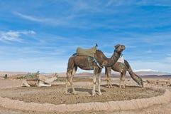 Los camellos acercan a AIT Ben Haddou, Marruecos Foto de archivo libre de regalías