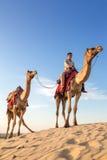 Los camellos con un jinete en Thar abandonan, Rajasthán, la India Foto de archivo