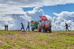 Los campesinos quitan la hierba vieja de campo con la bifurcación del abono de las aplicaciones imagenes de archivo