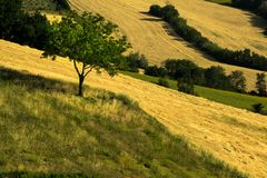 Los campos agrícolas cultivaron y araron con áreas de verde y de amarillo imagen de archivo libre de regalías