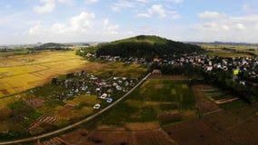 Los campos amarillos maduros del arroz rodean la pequeña montaña imágenes de archivo libres de regalías