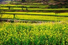Los campos colgantes de las flores Imagen de archivo libre de regalías