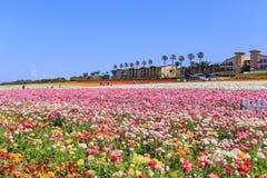 Los campos de flor imagenes de archivo