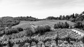 Los campos de Friuli Venezia-Julia cultivados con la vid imagen de archivo