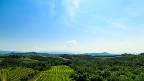 Los campos de Friuli Venezia-Julia cultivados con la vid foto de archivo libre de regalías