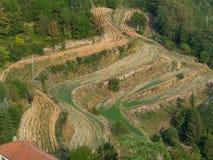 Los campos de la terraza siguen la forma de una colina Foto de archivo libre de regalías