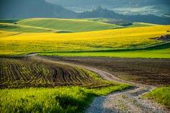Los campos de la violación de semilla oleaginosa en puesta del sol del verano se encienden Imagen de archivo libre de regalías