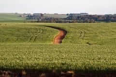 Los campos de las habas de la soja en Rio Grande hacen Sul el Brasil Imagen de archivo