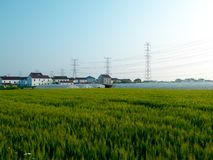 Los campos de trigo delante del plástico cubrieron invernaderos fotos de archivo libres de regalías