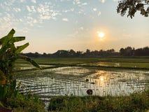 Los campos del arroz ven antes de puesta del sol imagenes de archivo