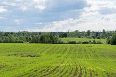 Los campos del comienzo del verano Fotos de archivo