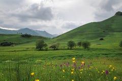 Los campos del verde Fotografía de archivo
