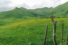 Los campos del verde Fotografía de archivo libre de regalías