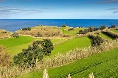 Los campos en el océano costean, Azores, Portugal Imagenes de archivo