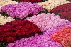 Los campos interminables de rosas Imagenes de archivo