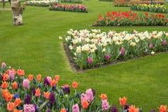Los campos multicolores de narcisos, de tulipanes y de jacintos en Holanda Imágenes de archivo libres de regalías