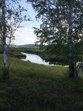 Los campos verdes con el lago y el bosque, abedul en primero plano, se chiban Imágenes de archivo libres de regalías