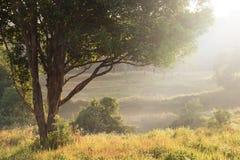 Los campos y la sol de hierba irradian en el fondo de la mañana Imagen de archivo