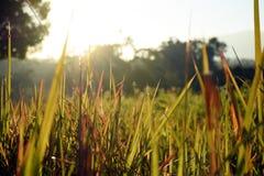 Los campos y la sol de hierba irradian en el fondo de la mañana Fotos de archivo libres de regalías