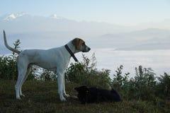 Los campos y los perros de la montaña Fotografía de archivo