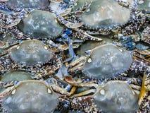 Los cangrejos azules exhibieron en venta Opinión del primer los crustáceos, el day& x27; captura de s de los mariscos en el hielo imágenes de archivo libres de regalías