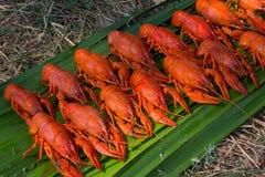 Los cangrejos red delicious en la hierba cocinaron en una comida campestre Foto de archivo libre de regalías