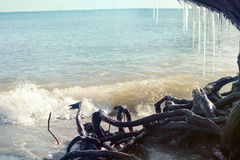 Los carámbanos cuelgan de un árbol en la playa Fotografía de archivo