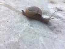 Los caracoles caminan lentamente por la mañana fotografía de archivo