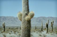 Los Cardones Nationaal Park Royalty-vrije Stock Fotografie