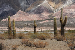 Los Cardones national park on Calchaquíes valley. Near Salta on the argentina andes Royalty Free Stock Photography