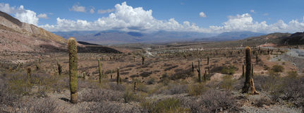 Los Cardones national park on Calchaquíes valley. Near Salta on the argentina andes Royalty Free Stock Photo